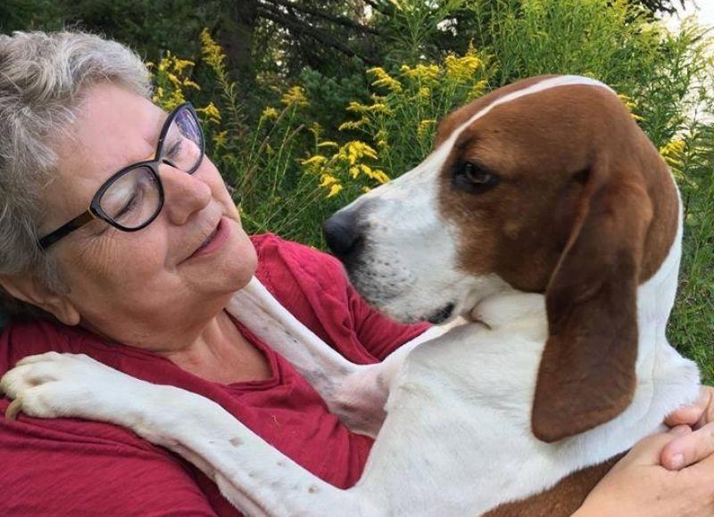Jacinthe entouré de chien